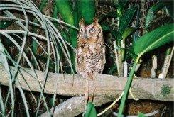 Wetland Owl Habitat at Florida Aquarium