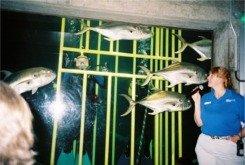 Divers in the shark tank at the Florida Aquarium in Tampa