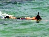 Florida snorkeling around Sarasota