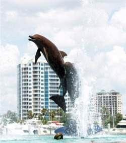 Dolphin Fountain Sarasota Florida Bay Front Park