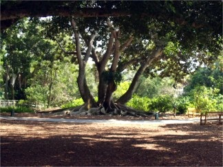marie-selby-botanical-gardens-10