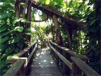 marie-selby-botanical-gardens-canopy-walk