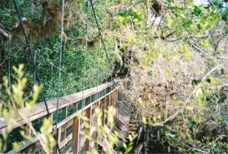 Tree top level on the Myakka Canopy Walkway
