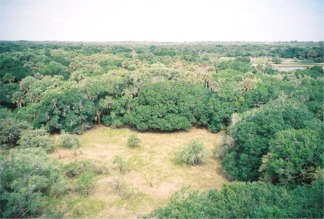 Looking out at Myakka State Park near Sarasota from the Observation Tower