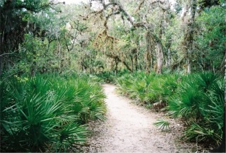 Myakka Nature Trail under the Palm trees