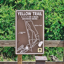 Trail Hiking at Oscar Scherer State Park's Yellow Trail
