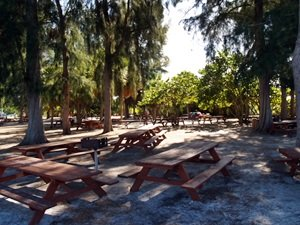 Picnic benches in the park at Siesta Key Beach