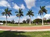 The Palm Trees of Payne Park Sarasota Florida