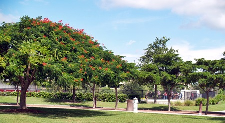 The beauty of nature in Payne park in sarasota Florida