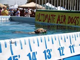 Dock Diving at Sarasota Pets Festival
