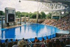shamu stadium at sea world orlando florida