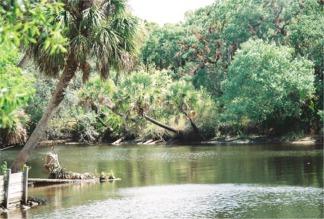 The Myakka River winds past Snook Haven near sarasota Florida