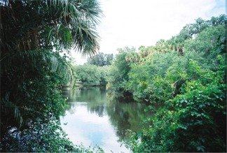 The Myakka River alongside Snook Haven Retreat