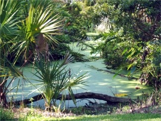 The Palmer Water Garden at Historic Spanish Point