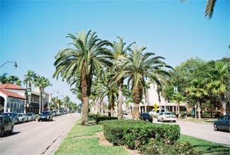 Venice Florida downtown Venice Avenue